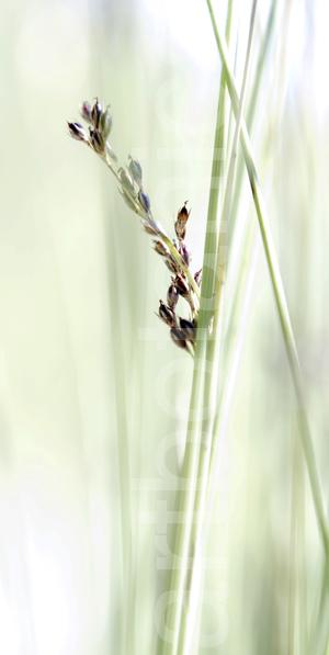 Dekor für Aluprint artbotanica